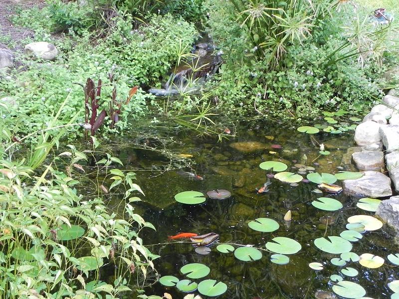 Pond design bmb irrigation for Coy ponds pictures